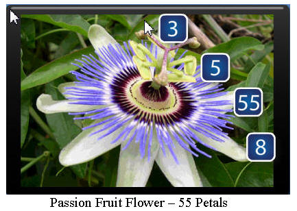 Passion-Fruit-Flower2.jpg