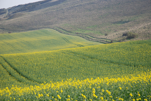peaceful-field.jpg