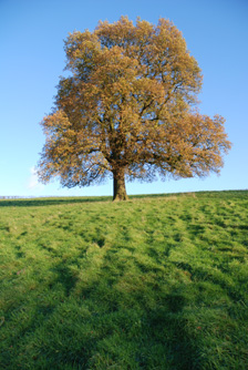 peaceful-tree.jpg